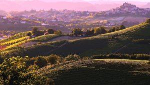 Wijngaarden Roddi (Langhe)