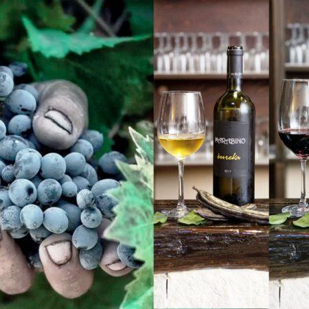 wijnen sicilie