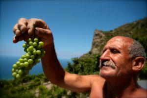 Sicilie druiven