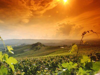 Pittoreske dorpjes en wijngaarden: e-biken in de Langhe