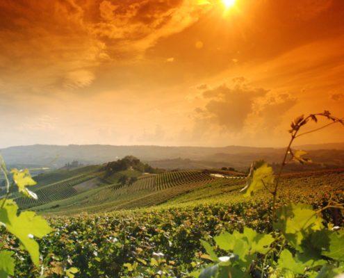 Wijngaarden landschap Langhe