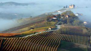 Wijngaarden Langhe - mist