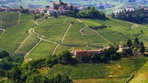 Wijngaarden Piemonte (Langhe)